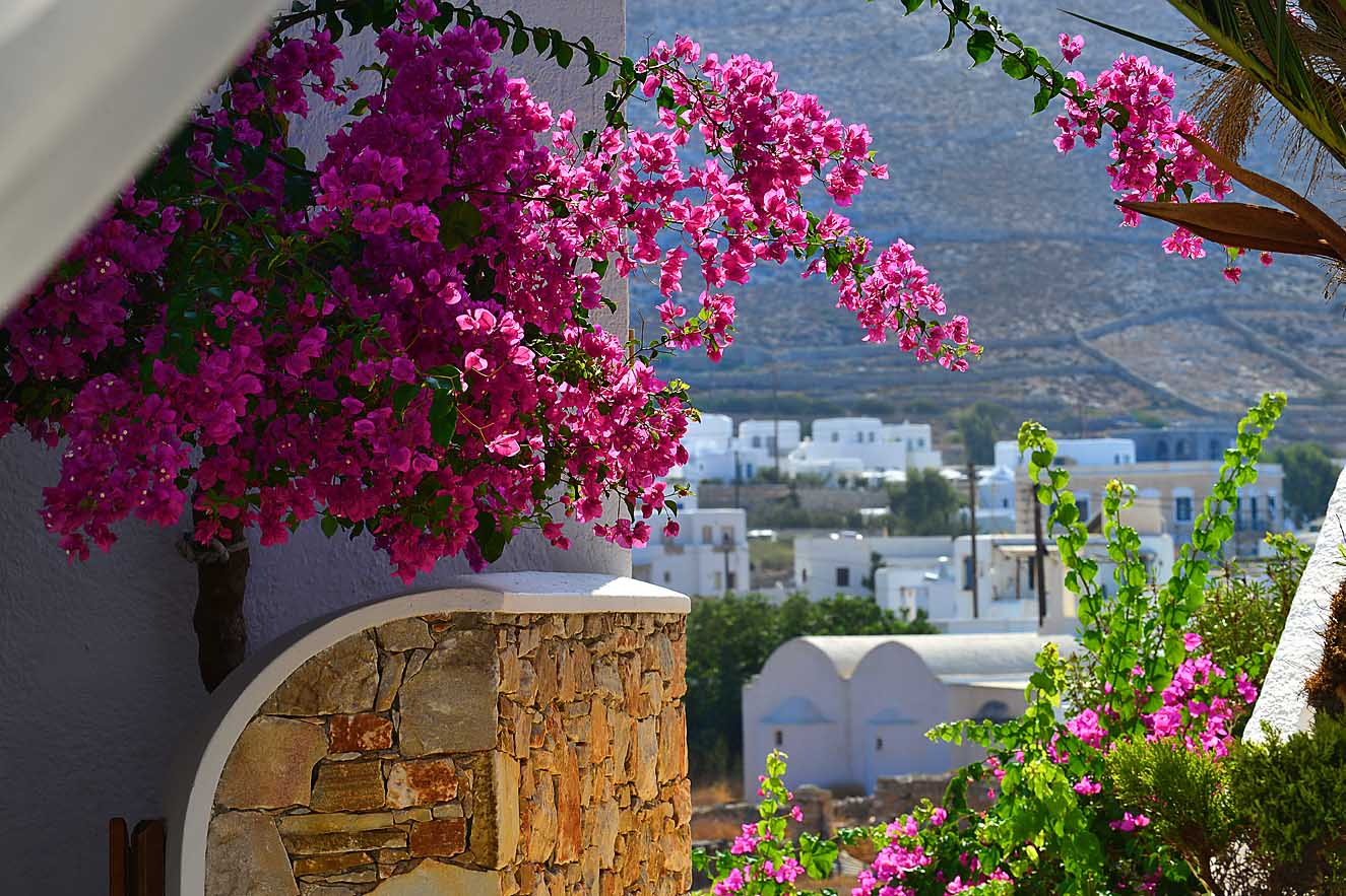 folegandros-island-greece-flowers